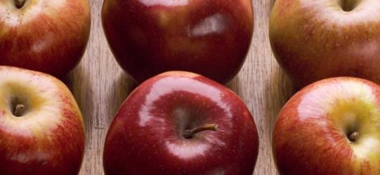 Alimentos de otoño para llevar una vida sostenible