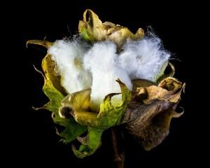 Beneficios del algodón ecológico en la salud