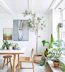 decoracion sostenible plantas