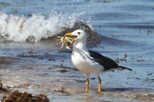 albatros en peligro de extinción